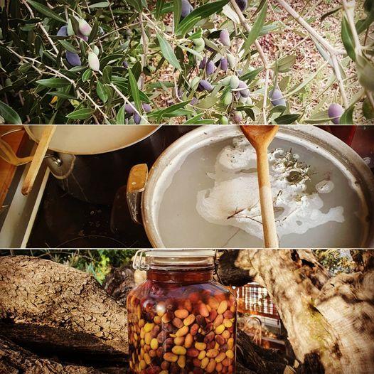 Les olives de l'arbre au bocal